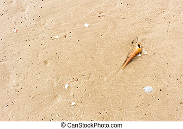シェルビーチ