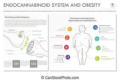 システム, ビジネス, infographic, 肥満, 横, endocannabinoid, 完了しなさい