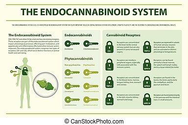 システム, endocannabinoid, 横, infographic