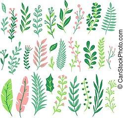 シダ, 草木の栽培場, 植物, セット, 自然, 葉, 葉, 隔離された, 装飾, ベクトル, 緑, シダ, 花, leaves.
