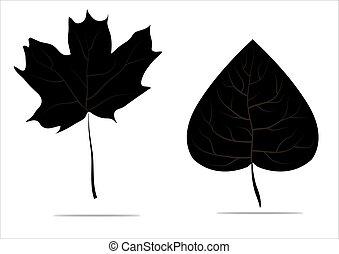 シナノキ, 葉, 隔離された, 秋, 黒い背景, 白, かえで