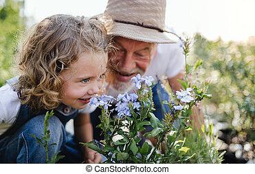 シニア, 裏庭, 祖父, garden., 小さい, 女の子, 園芸