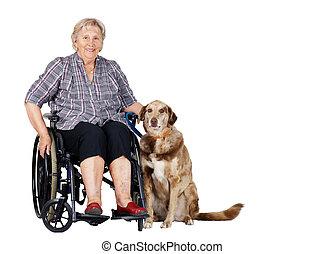 シニア, 車椅子, 女, 犬