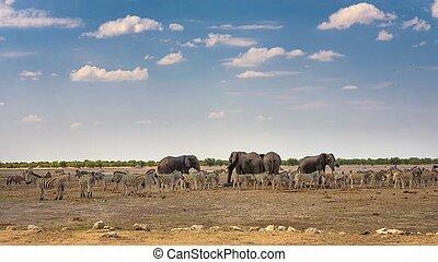 シマウマ, 象, 国立公園, ナミビア, アフリカ, waterhole, etosha
