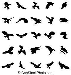 シルエット, セット, 飛行, 鳥