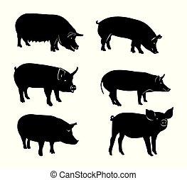 シルエット, セット, 黒, 豚