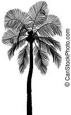 シルエット, ヤシの木