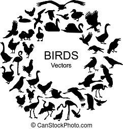 シルエット, 別, 種, コレクション, 鳥