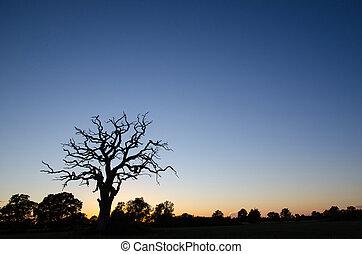 シルエット, 古い木