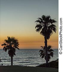 シルエット, 夕闇, 空, 上に, 木, 太平洋, やし