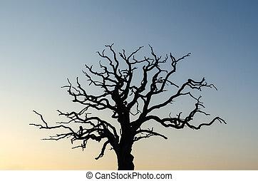 シルエット, 強大, 古い木