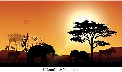 シルエット, 日没, 象