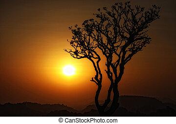 シルエット, 木, 日没