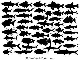 シルエット, 海, fishes.