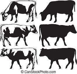 シルエット, 雄牛, 牛