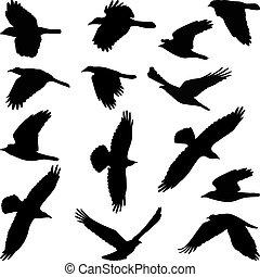 シルエット, 鳥