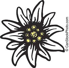 シンボル, アルプス, 花, ドイツ, ロゴ, alpinism, edelweiss