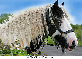 ∥, ジプシー, 馬