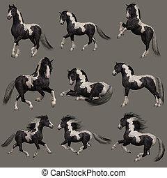 ジプシー, vanner, 馬, 3d, cg