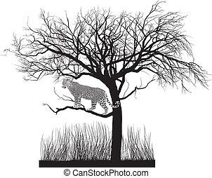 ジャガー, 木