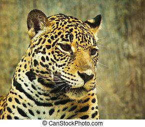 ジャガー, lived, 中央である, 南アメリカ