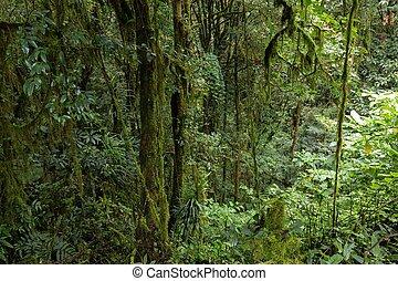 ジャングル, 海原, ぬれた