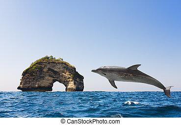 ジャンプする, イルカ, から, 波, 海洋