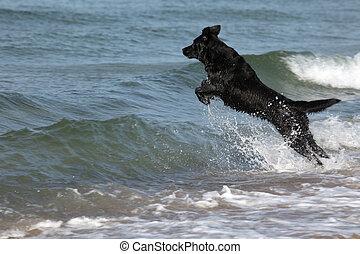 ジャンプする, 犬, 黒い海, 波, 上に
