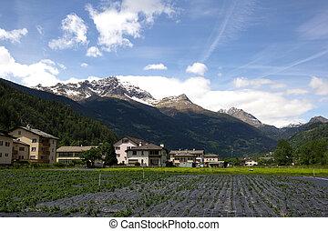 スイス, 農業