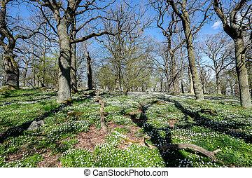 スウェーデン, 春
