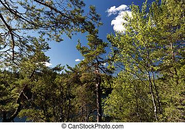 スウェーデン, 森林