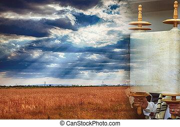 スクロール, 小麦, 神聖, 背景, フィールド, shavuot, 日, torah, の間