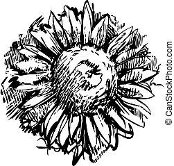 スケッチ, ひまわり, 開くこと, 植物, フィールド, つぼみ