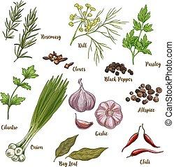 スケッチ, フルである, ハーブ, 色, イラスト, 料理の, 現実的, spices.