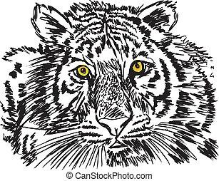 スケッチ, ベクトル, 白, イラスト, tiger.