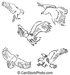 スケッチ, 手, ベクトル, eagles., pencil., 図画