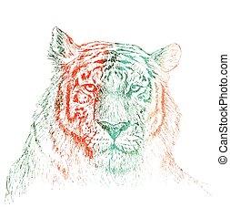 スケッチ, 手, tiger, 背景, 引かれる, 白い額面