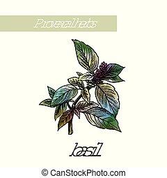 スケッチ, 自然, herbs., 白, スパイス, basil.