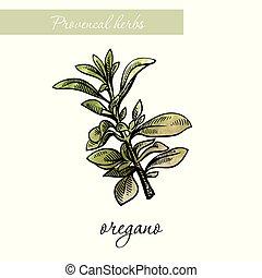 スケッチ, 自然, herbs., oregano., 白, スパイス
