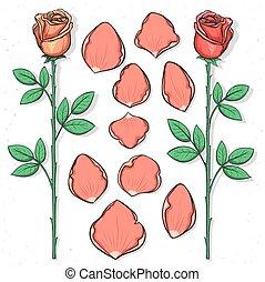 スケッチ, 花, バラ, ハンドメイド, 隔離された, 花弁, style.