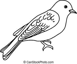 スケッチ, 隔離された, イラスト, 手, ベクトル, 背景, 引かれる, 白い鳥