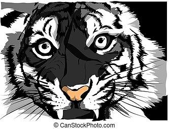 スケッチ, 顔, tiger, s, ベクトル, 黒, 白