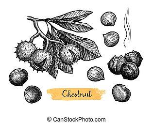 スケッチ, chestnuts., インク