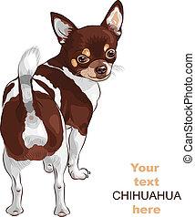 スケッチ, chihuahua, 品種, 犬, ベクトル, 微笑