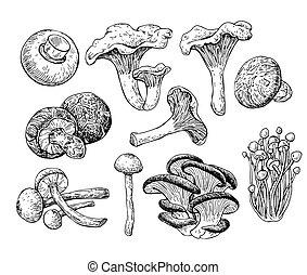 スケッチ, illustration., きのこ, 食物, 手, ベクトル, iso, 引かれる, 図画