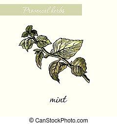 スケッチ, mint., 自然, herbs., 白, スパイス