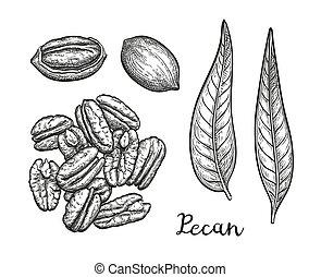 スケッチ, pecan, インク