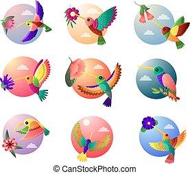 スタイル, セット, カラフルである, 隔離された, 小さい, 背景, 花, 白い鳥, ハチドリ