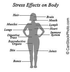 ストレス, 効果, 上に, 体