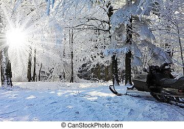 スノーモービル, 上に, ∥, 森林, ski-track